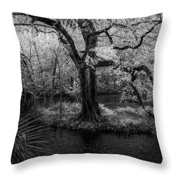 Wisdom Of A Tree Throw Pillow