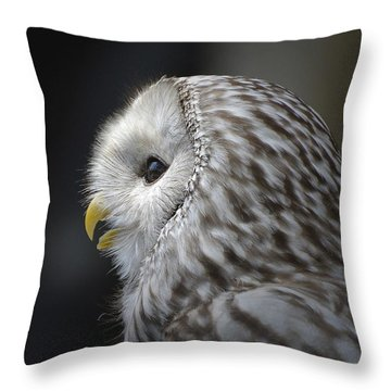 Wise Old Owl Throw Pillow by Kathy Baccari