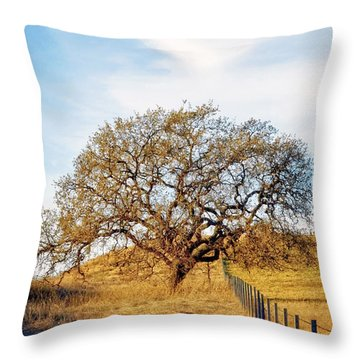 Wise Old Tree Throw Pillow by Aron Kearney