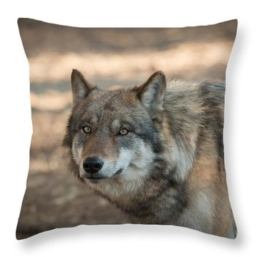 Wise Wolf Throw Pillow