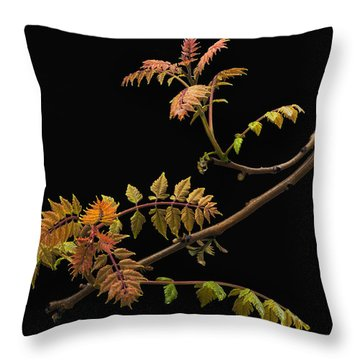 Wisteria Colors Throw Pillow