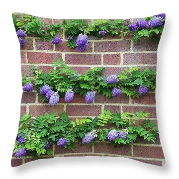 Wisteria Frutescens Longwood Purple Throw Pillow