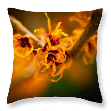 Throw Pillow featuring the photograph Witch Hazel by Erin Kohlenberg