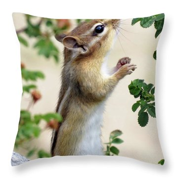 Within Reach - Chipmunk Throw Pillow by MTBobbins Photography