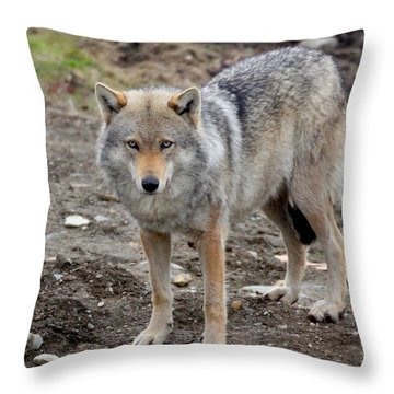 Wolf 2 Norway Throw Pillow