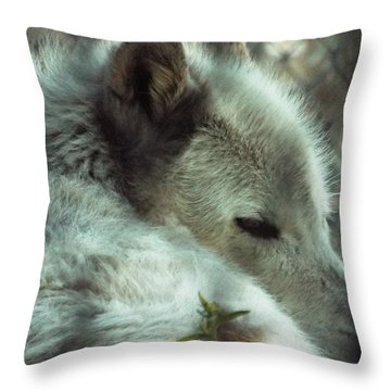 Wolf At Rest Throw Pillow