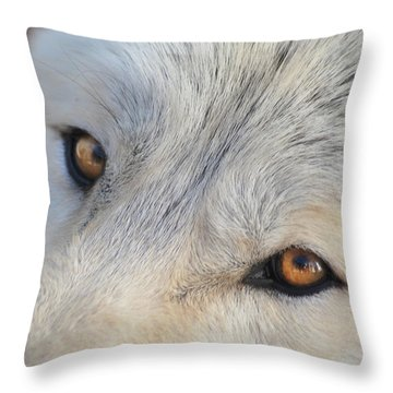 Wolf Eyes Throw Pillow by Carolyn Dalessandro