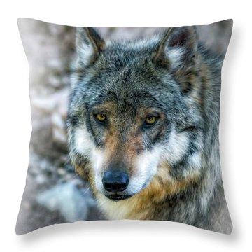 Wolf Gaze Throw Pillow