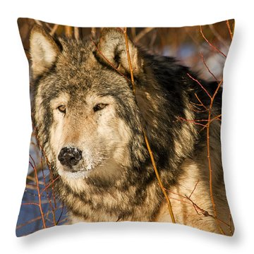 Wolf In Brush Throw Pillow