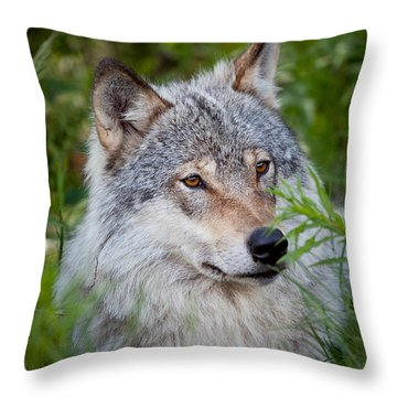 Wolf In The Grass Throw Pillow