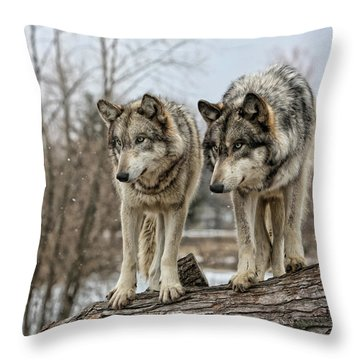Throw Pillow featuring the photograph Wolf Pair by Shari Jardina