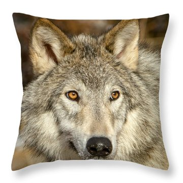 Wolf Portrait Throw Pillow by Jack Bell