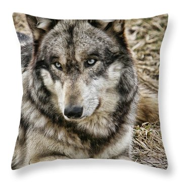 Throw Pillow featuring the photograph Wolf Portrait by Shari Jardina