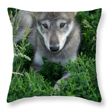 Throw Pillow featuring the photograph Wolf Pup Portrait by Shari Jardina