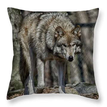 Wolf Stalking Throw Pillow