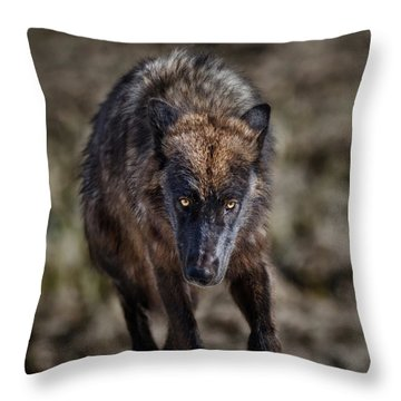 Wolf Tracking Me? Throw Pillow