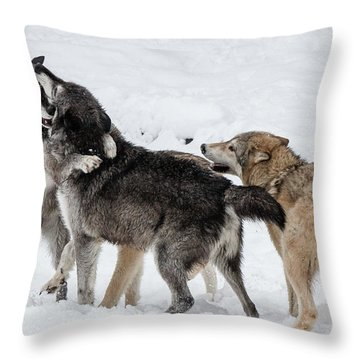 Wolves At Play Throw Pillow