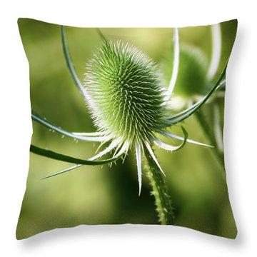 Wonderful Teasel - Throw Pillow