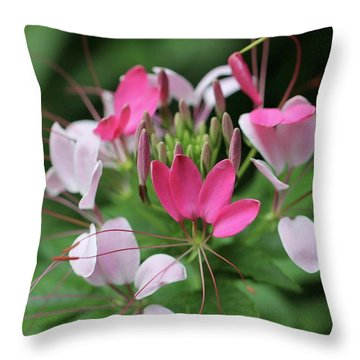 Throw Pillow featuring the photograph Wonders Of Cleome by Deborah  Crew-Johnson