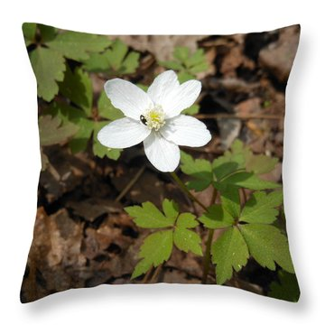 Throw Pillow featuring the photograph Wood Anemone by Linda Geiger