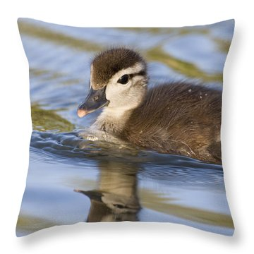 Wood Duck Duckling Swimming Santa Cruz Throw Pillow by Sebastian Kennerknecht