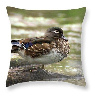 Wood Duck Hen Throw Pillow