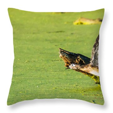 Wood Duck Hen Takes Flight Throw Pillow by Edward Peterson