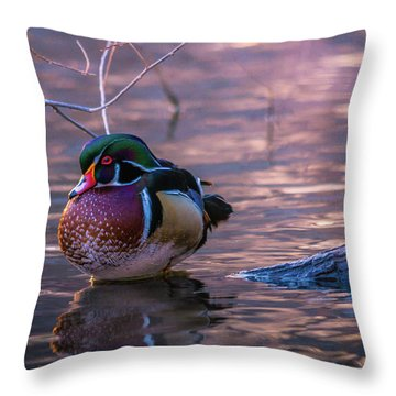 Wood Duck Resting Throw Pillow