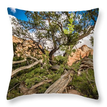 Wood Frame At Zion Throw Pillow