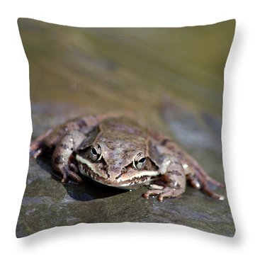 Wood Frog Close Up Throw Pillow by Christina Rollo