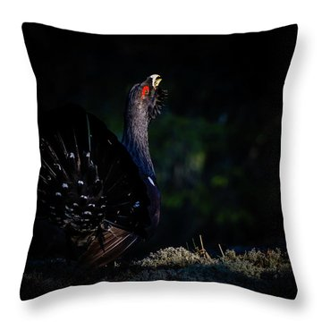 Wood Grouse's Sunbeam Throw Pillow by Torbjorn Swenelius