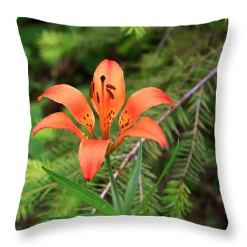 Wood Lily Also Called Prairie Lily Or Western Red Lily Throw Pillow by Louise Heusinkveld