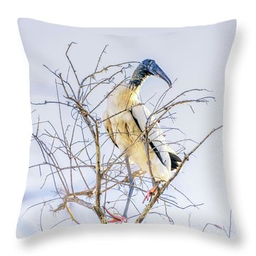 Wood Stork Sitting In A Tree Throw Pillow