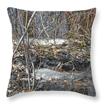 Woodcock's View Of The Forest Throw Pillow