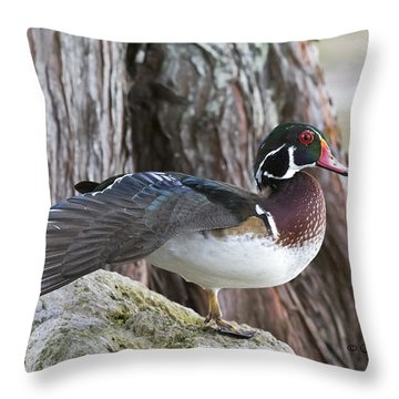 Woodie Stretch Throw Pillow