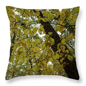 Throw Pillow featuring the photograph Woodland Canopy by Andrew Pacheco