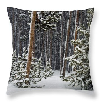 Woodland Snowstorm In Yellowstone Throw Pillow