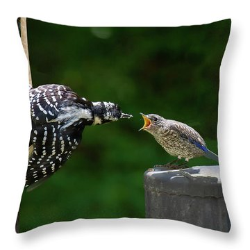 Woodpecker Feeding Bluebird Throw Pillow