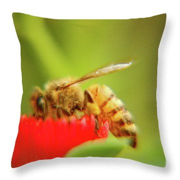 Throw Pillow featuring the photograph Worker Bee by Micah May