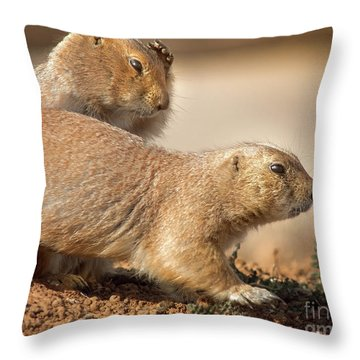 Worried Prairie Dog Throw Pillow by Robert Frederick