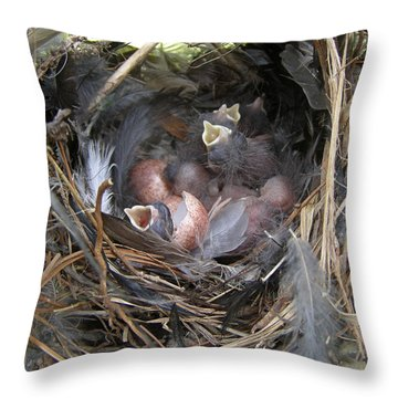 Throw Pillow featuring the photograph Wren Babies by Angie Rea