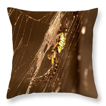 Writing Spider Throw Pillow