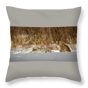 Yampa Glare  Throw Pillow