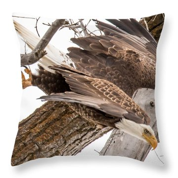Yampa Perch  Throw Pillow