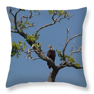 Yawkey Wildlife Reguge - American Bald Eagle Throw Pillow by Suzanne Gaff