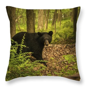 Yearling Black Bear Throw Pillow