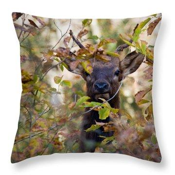 Throw Pillow featuring the photograph Yearling Elk Peeking Through Brush by Michael Dougherty