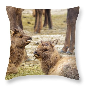 Throw Pillow featuring the photograph Yearlings by Jeff Swan