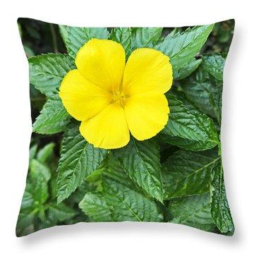 Yellow Alder Blossom Throw Pillow