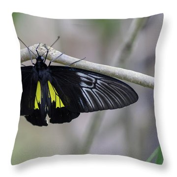 Yellow And Black Butterfly Throw Pillow